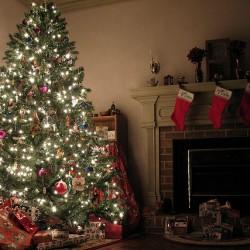 VB realty Christmas Tree giveaway